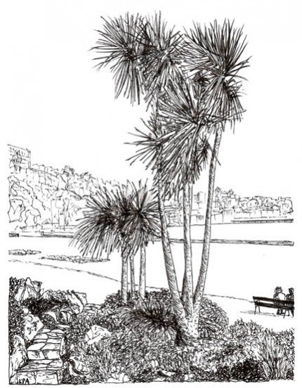 Drawn palm tree pen and ink #8
