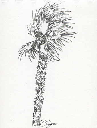 Drawn palm tree pen and ink #9