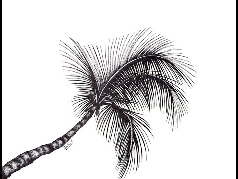 Drawn palm tree pen and ink #10