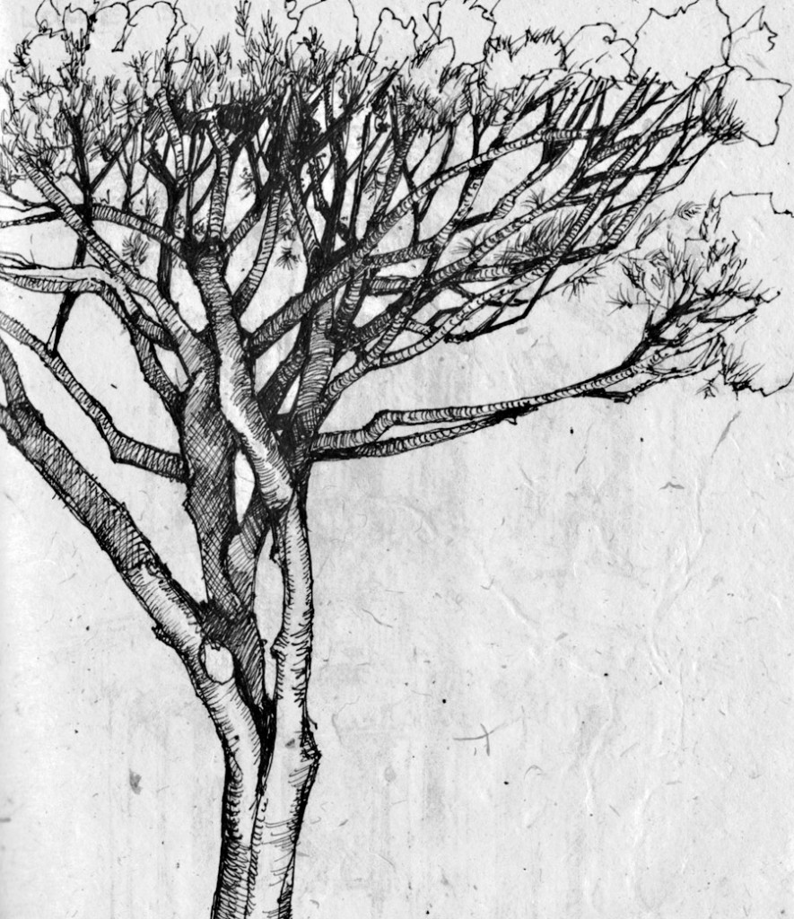 Drawn palm tree pen and ink #6