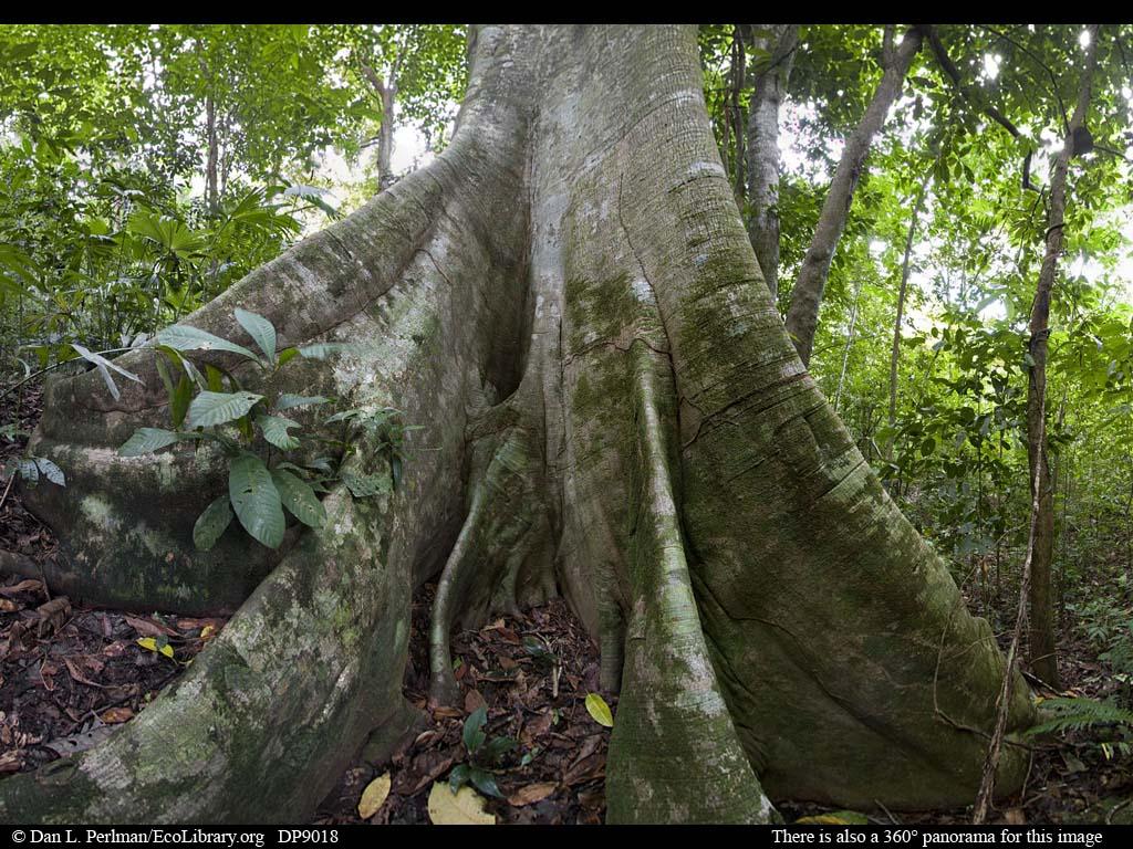 Drawn palm tree rainforest tree #8