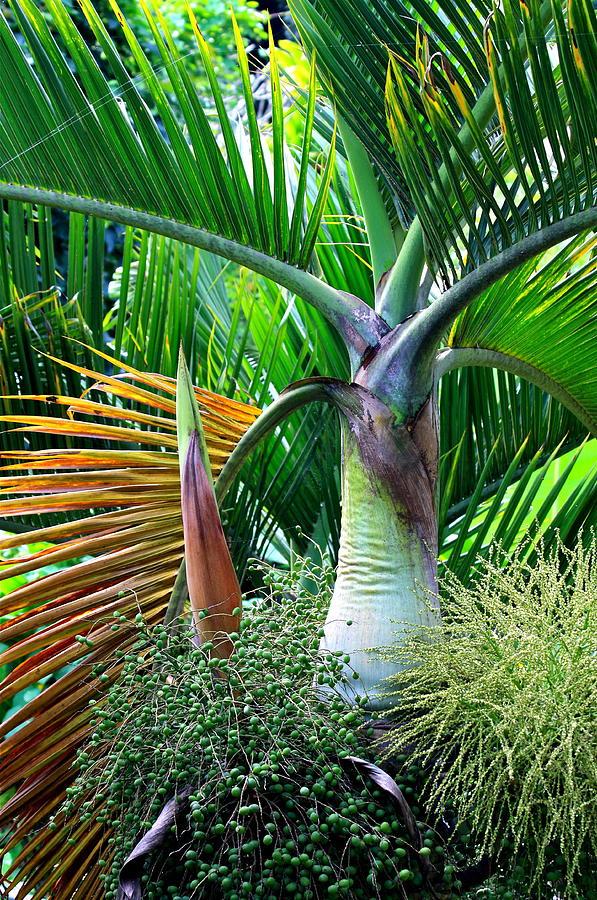 Drawn palm tree rainforest tree #11