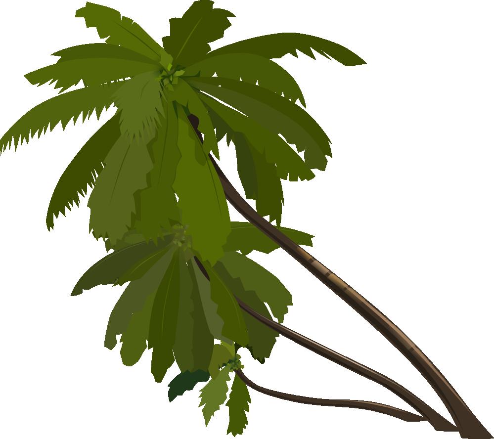Drawn palm tree rainforest tree #12