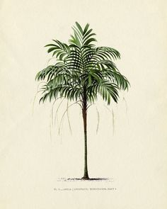 Drawn palm tree retro #4