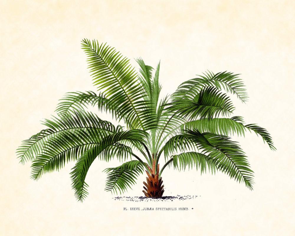 Drawn palm tree retro #9