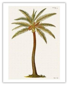 Drawn palm tree retro #7