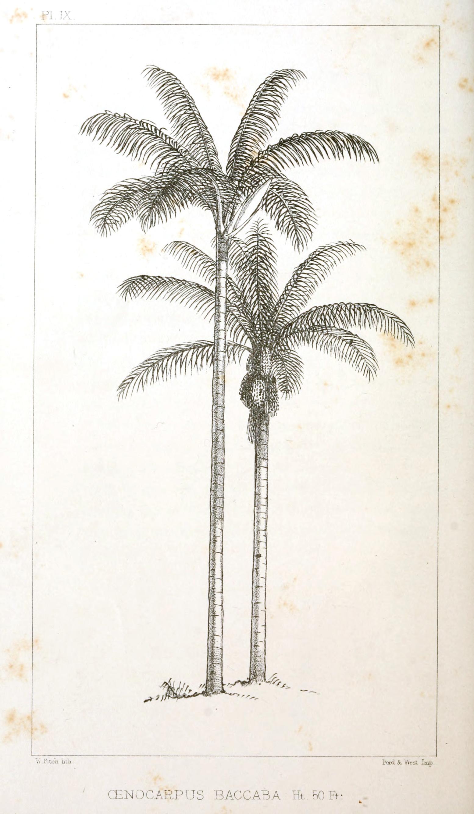 Drawn palm tree retro #8