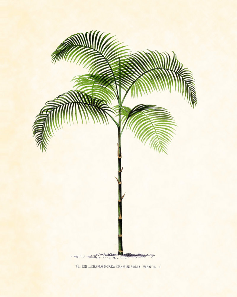 Drawn palm tree retro #5