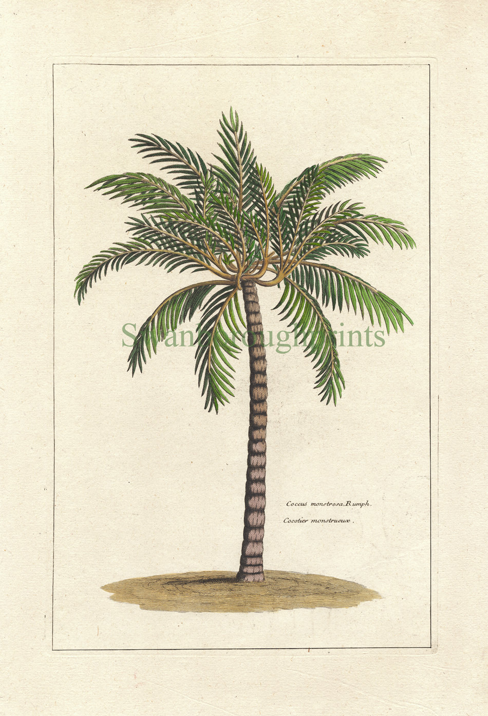 Drawn palm tree retro #6
