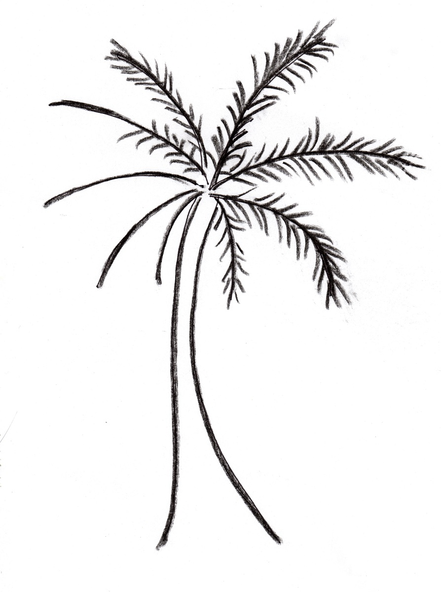 Drawn palm tree simple #9