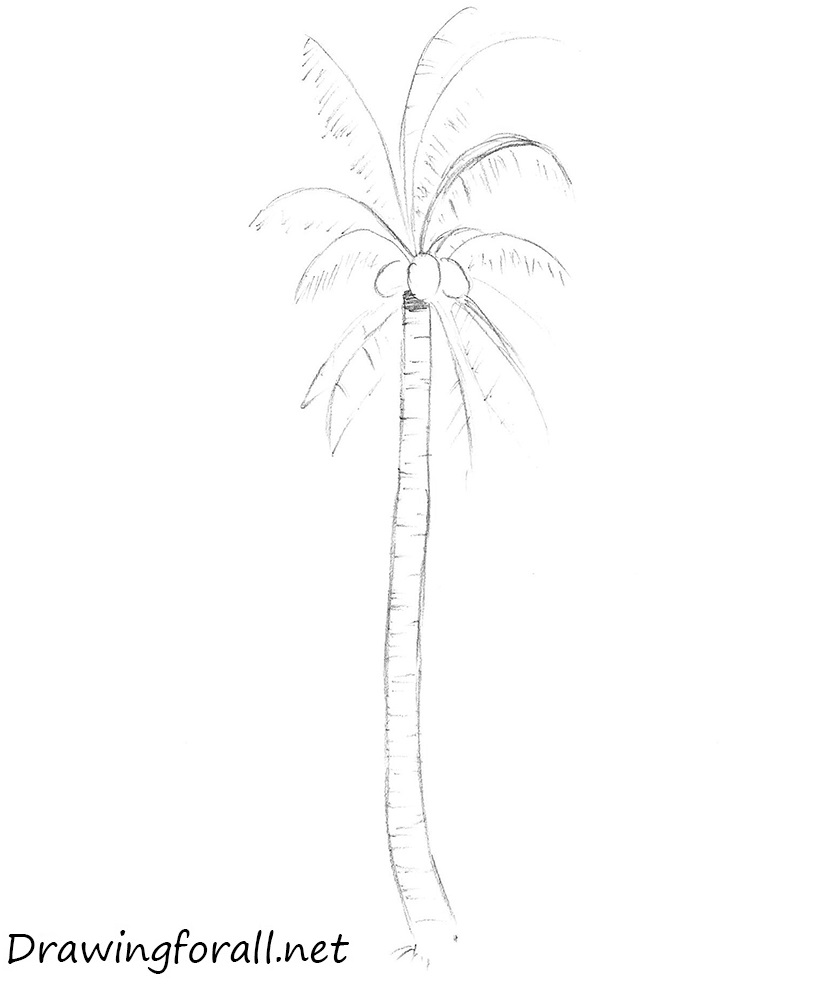 Drawn palm tree step by step #10