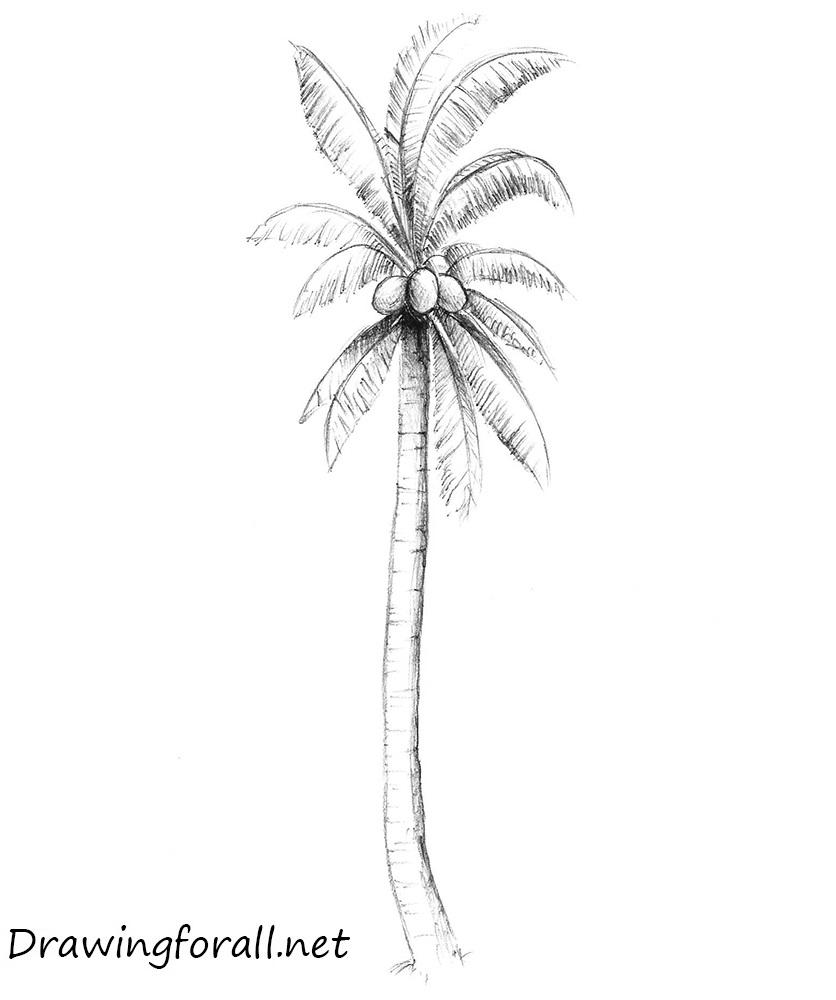 Drawn palm tree step by step #7
