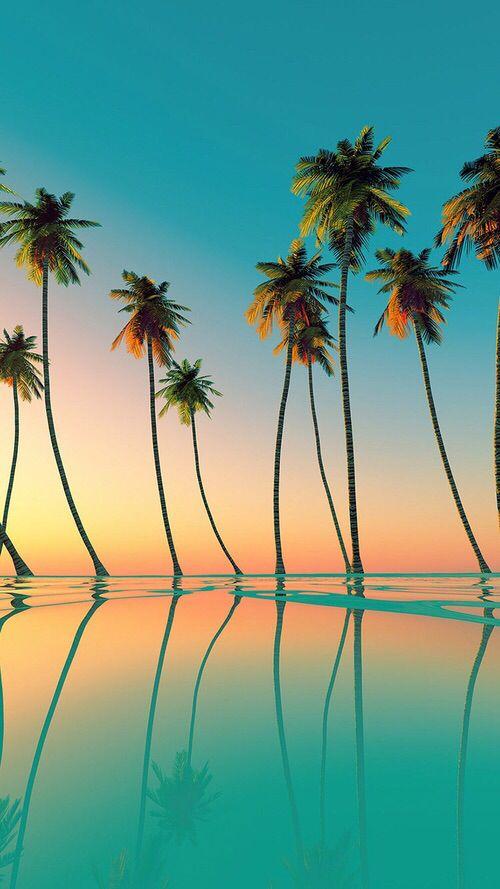 Drawn palm tree summer beach #3