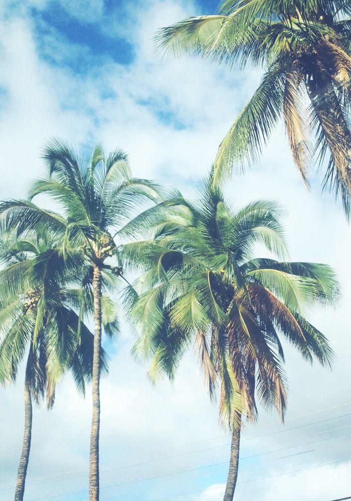 Drawn palm tree summer beach #5