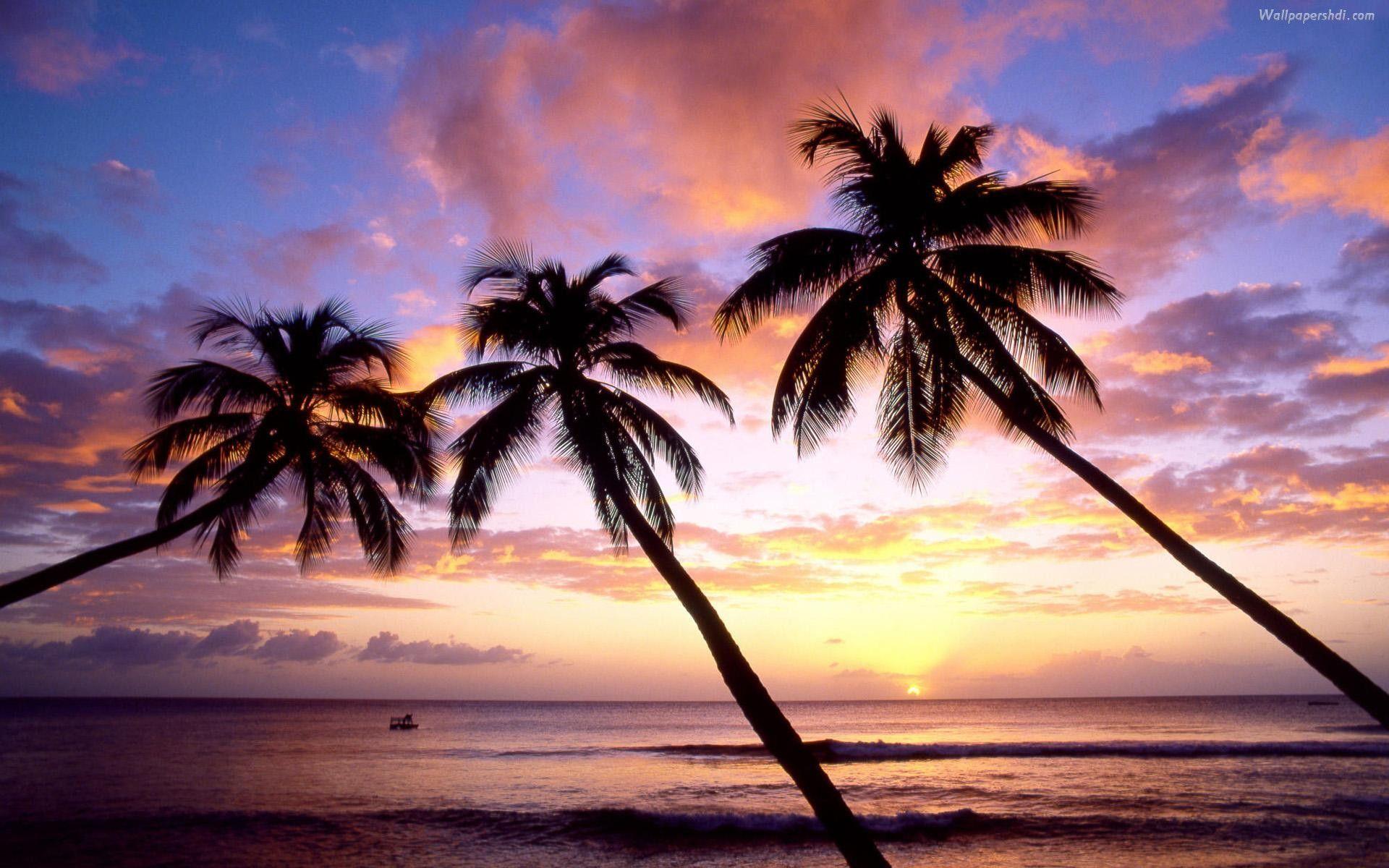 Drawn palm tree summer beach #6