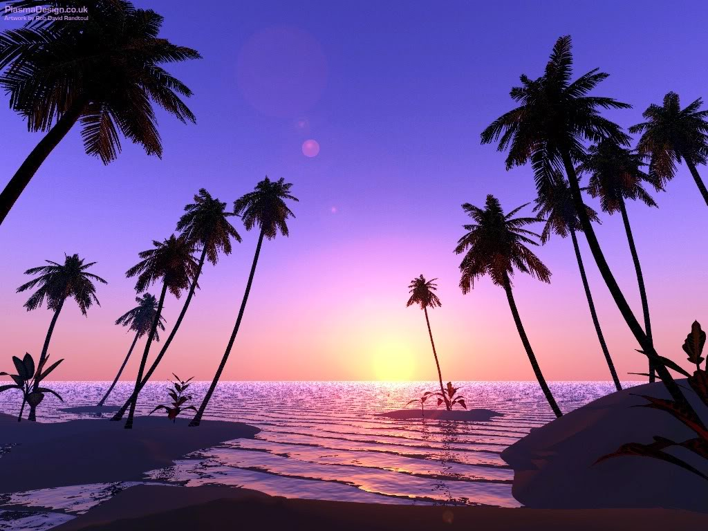 Drawn palm tree sunset Beach Wallpapers Trees Drawing Palm