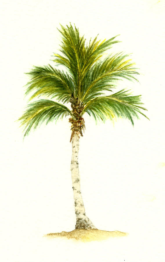 Drawn palm tree watercolor painting Michael Painting 3 Vigliotti Palm