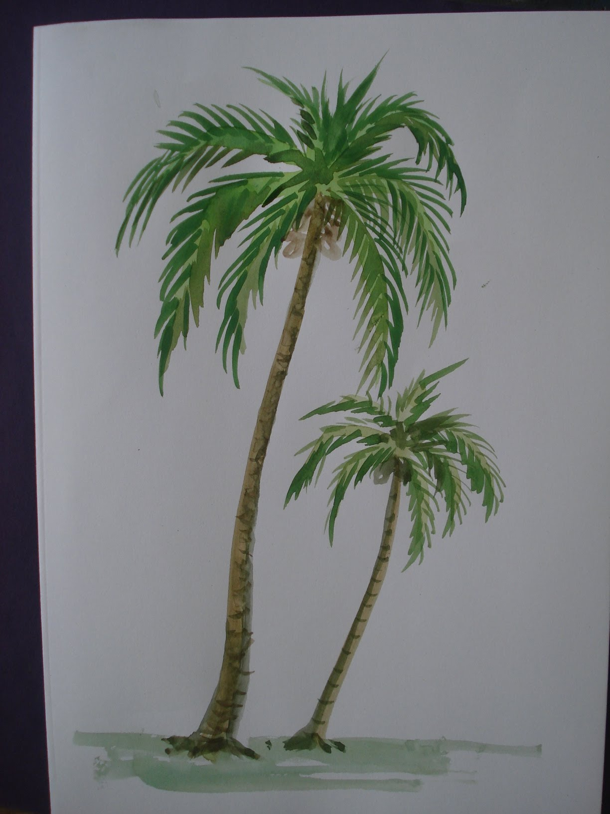 Drawn palm tree watercolor painting Using To colour with colour