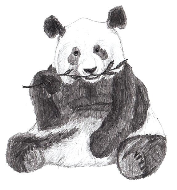 Drawn panda Draw Draw Panda How Lessons