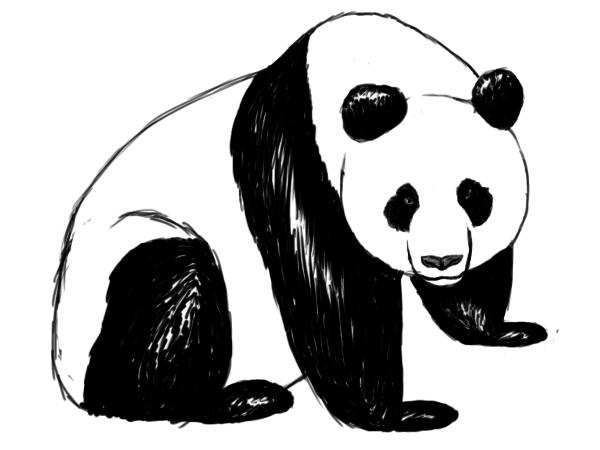 Drawn panda Panda A Central which panda