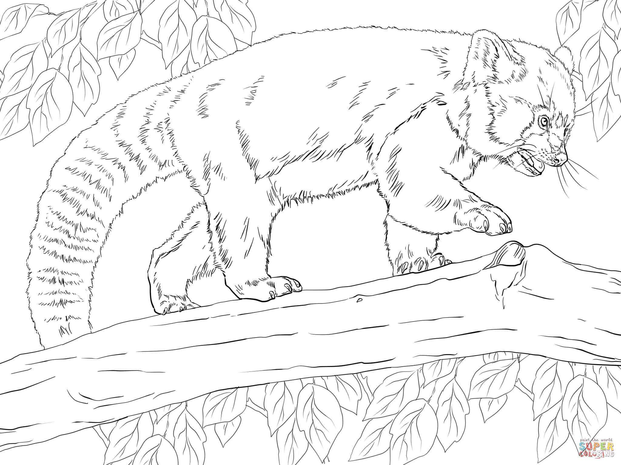 Drawn red panda koala Free with Click page Realistic