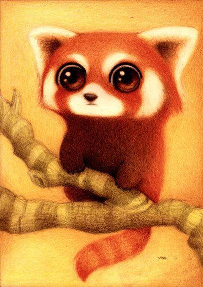 Drawn red panda animated 90 on animals little best