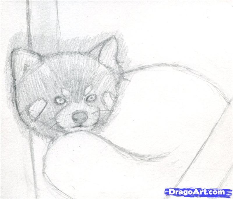 Drawn red panda pet Panda 4 to Draw Red