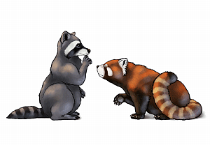 Drawn red panda epic Animals: Design to Red How