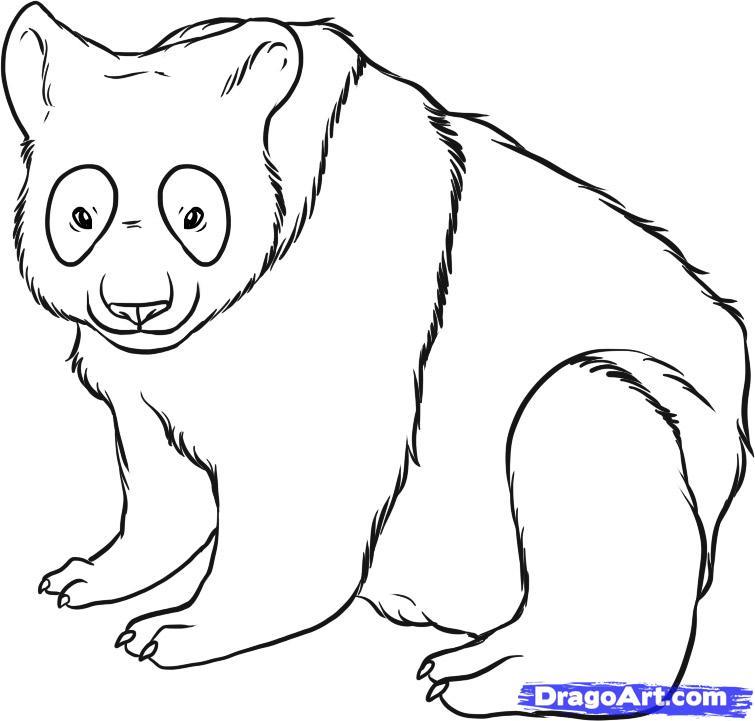 Drawn polar  bear giant How FREE to bear to