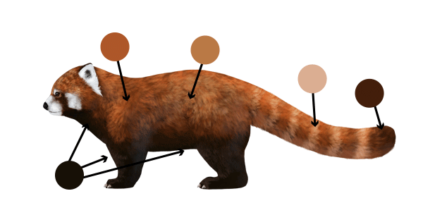 Drawn panda one color Head How Animals: and Raccoons