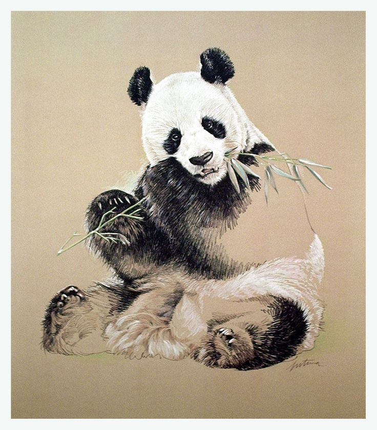 Drawn panda one color Panda Drawing Pandas on Pinterest