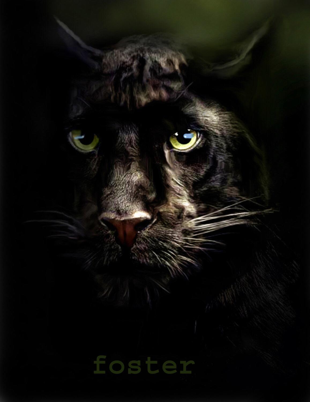 Drawn panther cat Panther big black painting Black