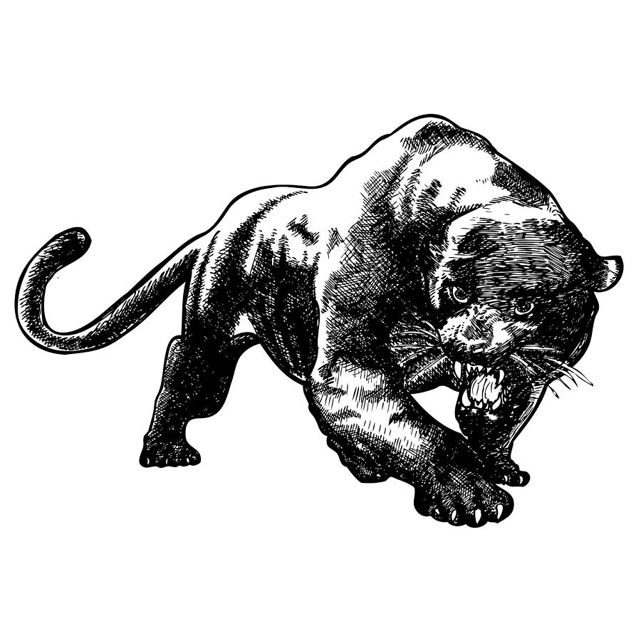 Drawn panther realistic Images Drawing Drawing Panther Panther