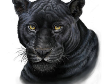 Drawn panther realistic Print Painting Black Print Lynx