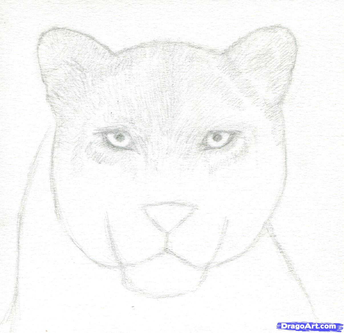 Drawn panther realistic Drawing Panther draw how Panther