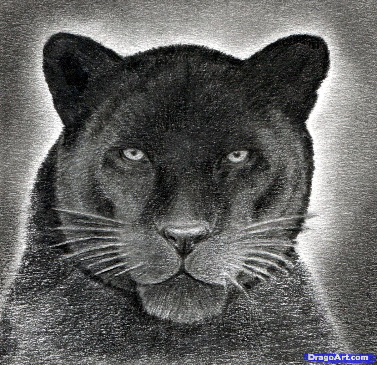 Drawn panther realistic Drawing draw draw Panther to