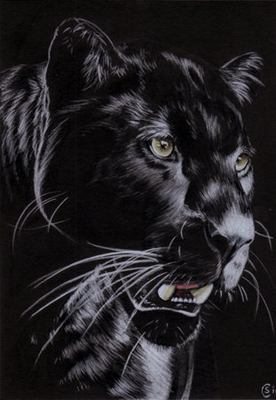 Drawn panther realistic  Nocturnal Black DrawingPanther KGrahamStudios