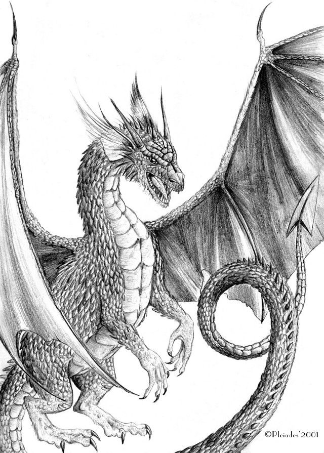 Drawn paper dragon The One drawings on dragon