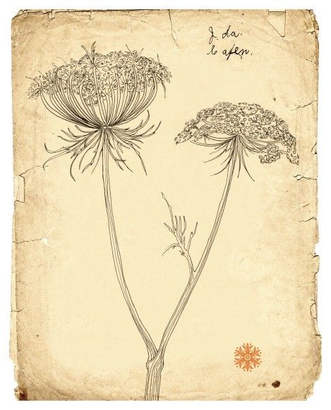 Drawn wildflower basic #5