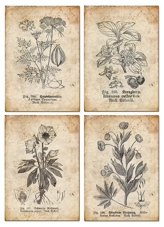 Drawn vintage flower old Drawing MemoriesPictures floral on ideas