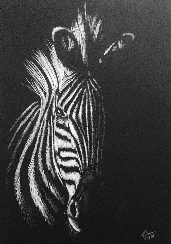 Drawn paper painting Drawing Zebra on pencil Zebra