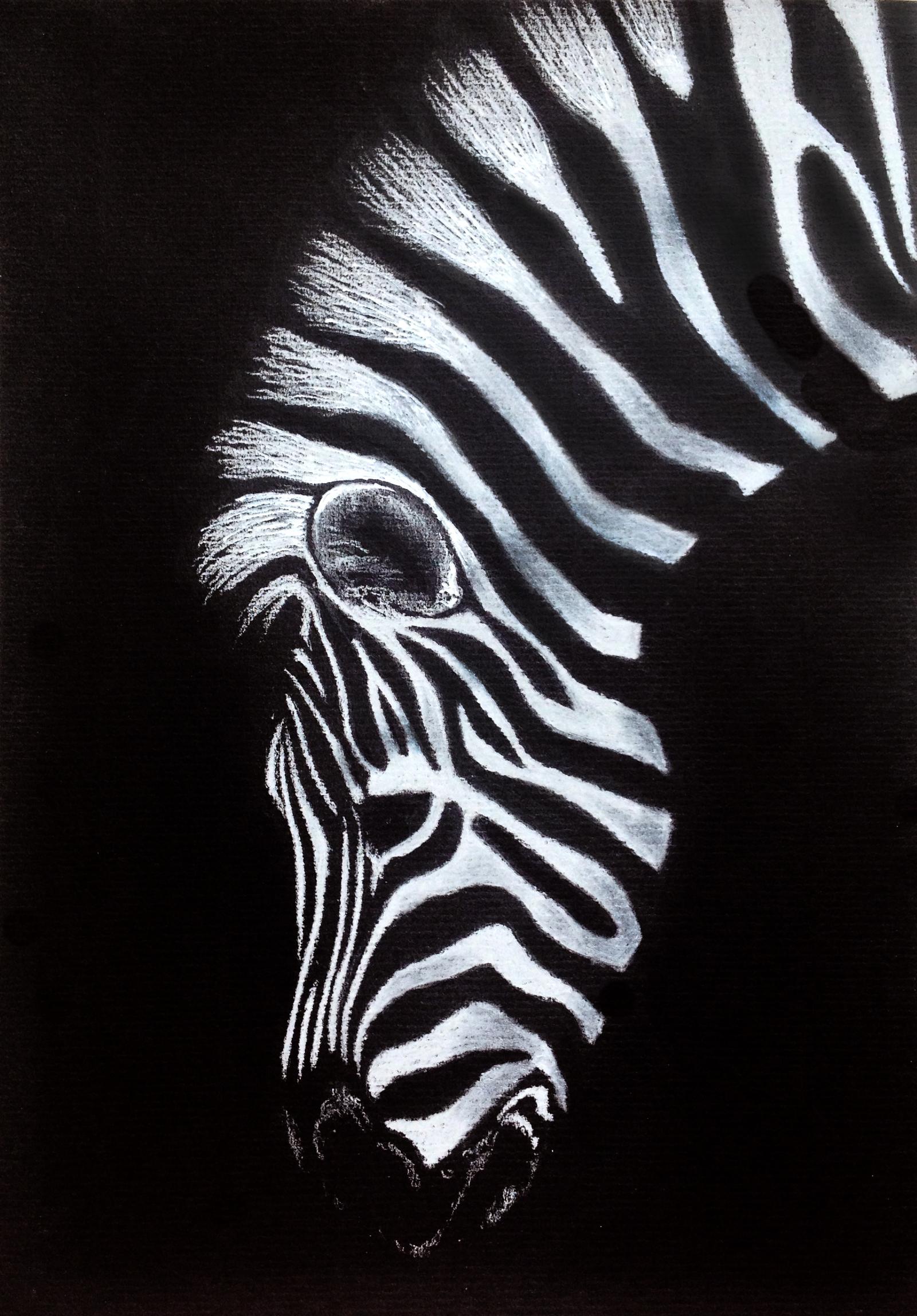 Drawn paper painting On White black drawing Zebra