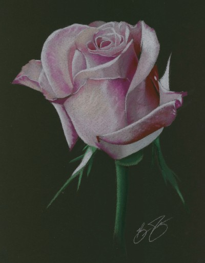 Drawn rose pastel drawing Black on pencil Find Like