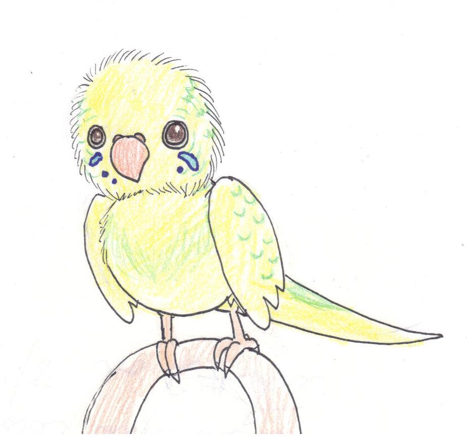 Drawn parakeet Rubberbird drawing Tweedy drawing for