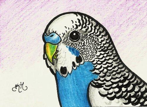 Drawn parakeet ~  Parakeet Parakeet memory