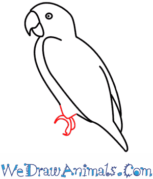 Drawn parrot #3
