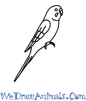 Drawn parakeet Draw How a  to
