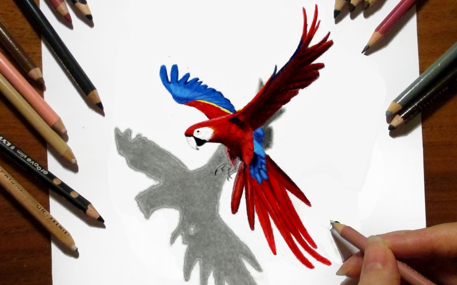 Drawn parrot bird fly YouTube Time Drawing: 3D Flying