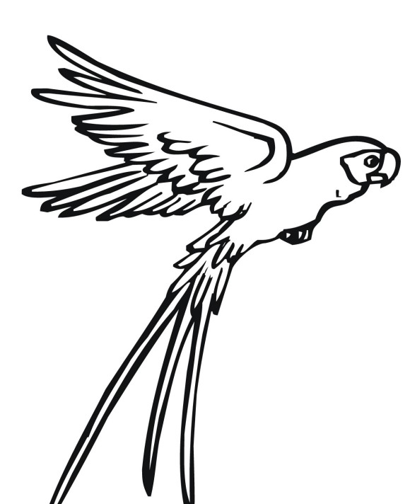 Drawn parrot bird fly Clipart Flying Clipart Drawing Panda
