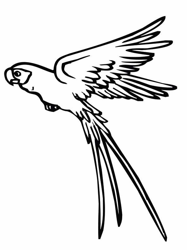 Drawn parrot bird fly Flying coloring is Pinterest Page